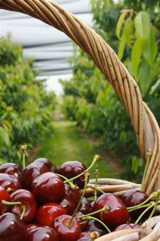 De-Hoenderik-Tricht-Fruitbeleving
