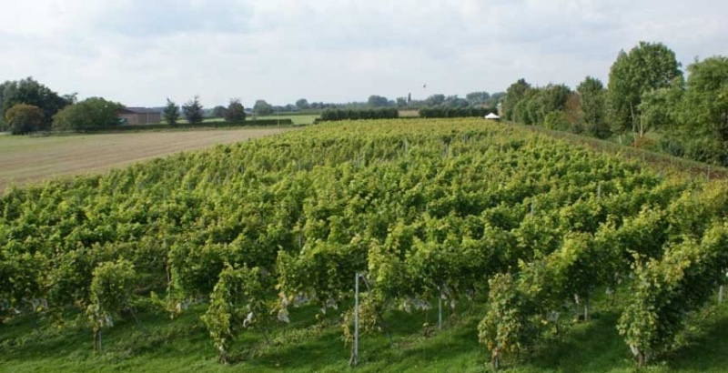 DeWijngaard-Rumpt-bomen