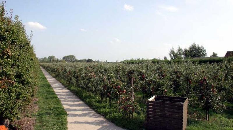 FruitbedrijfStek-Kedichem-fruitgaard