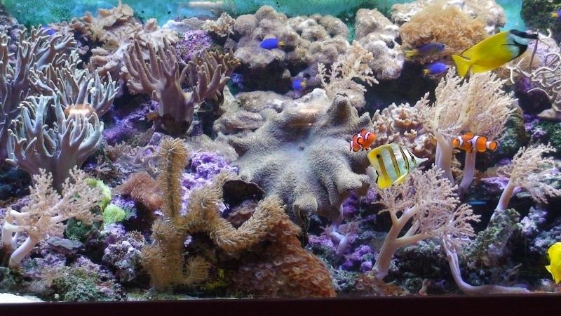 Aqua-Zoo-Leerdam-aquarium