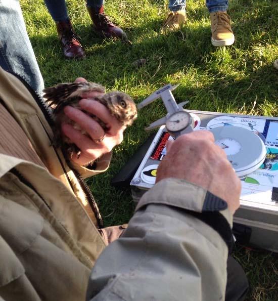 Kennisdeling in de natuur van de Lingestreek